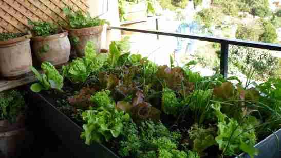 Mesa de cultivo (ajena) toda llena de plantas :)